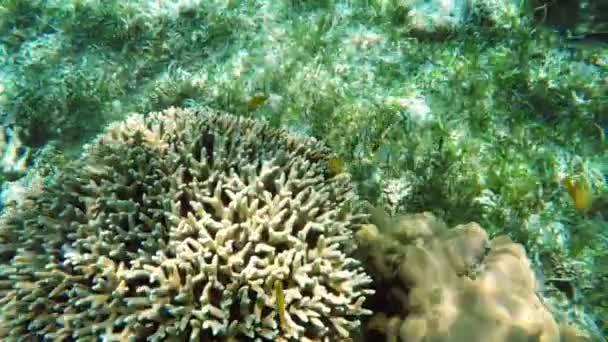 Korallenriff und tropische Fische.