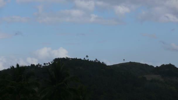 Krajina s kokosovými palmami a hory