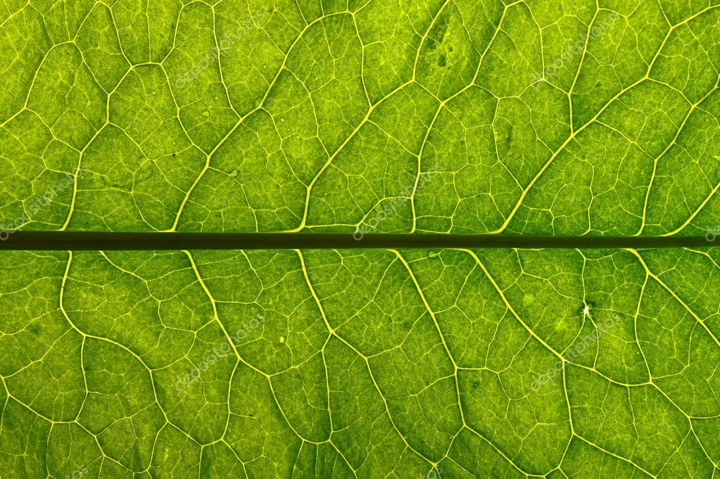 closeup plant texture background