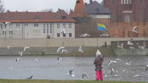 Dítě hází chleba ptáci jsou létající kolem Kid Red zablokován staré katedrála v řece holčička je krmení ptáků rackové holubi panoráma přeháňky