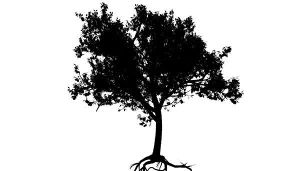 Tibetské Cherry Prunus Serrula malý strom silueta z animovaný strom je Swaying na vítr tenký kmen větví jsou ohromující listy jsou míchání