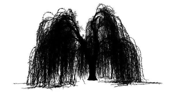 Smuteční vrba Salix Babylonica okrasný strom silueta z animovaný strom je Swaying na vítr větve jsou ohromující úzké listy jsou míchání