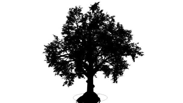 Širokolistý listnatý strom silueta z animovaný strom je Swaying na vítr Broad-Leaved Tree kulaté ve tvaru koruny ohromující větvemi a listy