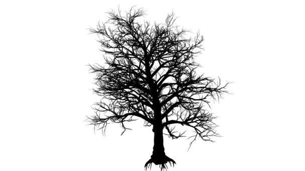Jižní holé větve stromu silueta z animovaný Magnolie je Swaying na vítr větve jsou ohromující strom na podzim podzim zima