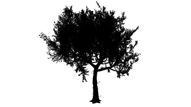 Červeného dubu Quercus Rubra tenký kmen zaoblené korunní silueta z animovaný strom je Swaying na vítr větve jsou ohromující listy jsou vlající