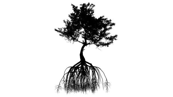 Červená mangrovových dlouhé kořeny silueta z strom malý animovaný strom je Swaying v The Wind větve jsou ohromující listy jsou vlající Rhizophora mandl