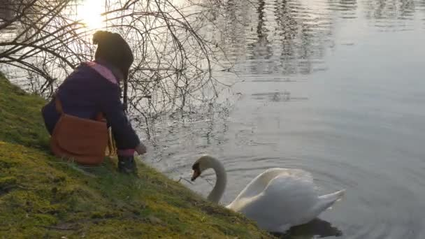 Kid Feeds a White Swan Gives a Grass to the Bird Swan is Swimming by Tranquil Serene Pond Little Girl is Sitting on a Green Bank of a Lake Springtime