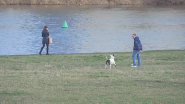 Man is Playing With White Pitbull at the River Woman is Walking Along a River People Walking With a Dog by a Green Meadow at the River Bank Mild Winter