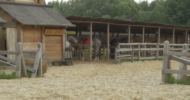 Dva koně a herci ve stáji pod přístřešek, dřevěný plot, Sandy Stadium