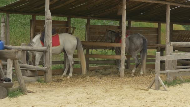 Two Horses Are Standing, Feeding in a Stable