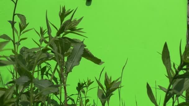 Green Fresh Foliage of The Wild Grass, Slow Motion
