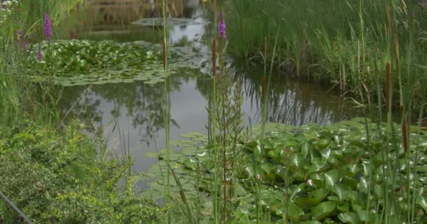Swampy Pond with Water Lilies, Leaves