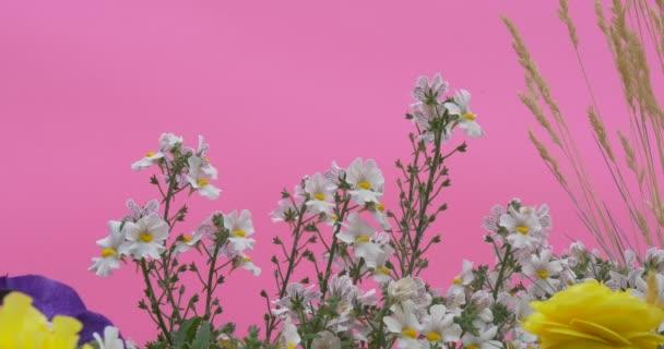 Záhonu s modrými Petúnie, žluté květy, Chundelka, Windgrass. Closeup bílé květy