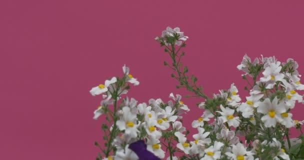 Fluttering White Field Flowers on Green Stalks