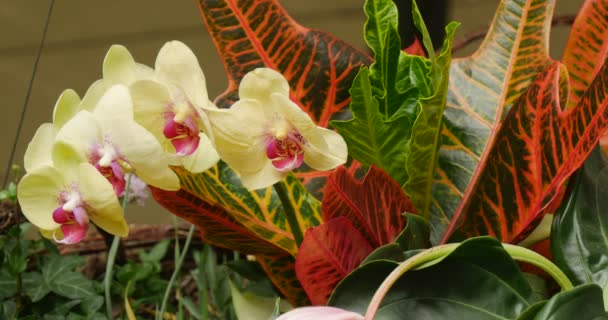 Bouquet Of Flowers Floral Composition Orchid Branch Red Orange Green Big Leaves Close View John Paul II Municipal Public Library in Opole Poland
