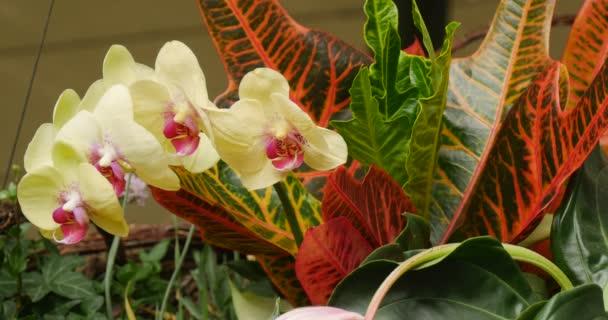 Kytice květin květinové složení Orchid větev rudá oranžová zelená Velká listí zavřít pohled Jan Pavel II městská veřejná knihovna v Opolský Polsko
