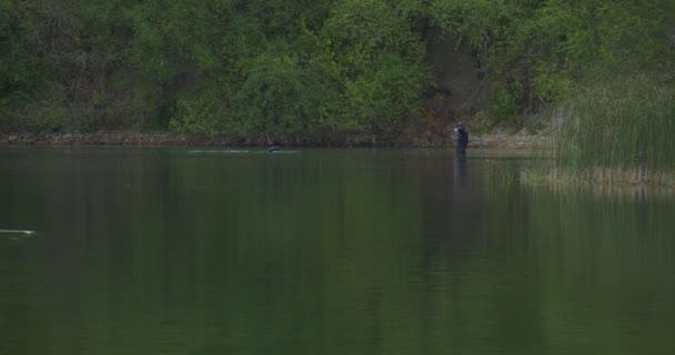 Két férfi búvárok a fürdőruha búvárok rokonságban fekete öltöny is Merüljünk bele a tó tó folyó benőtt bankok Reed zöld friss fák Forest Grove ősz