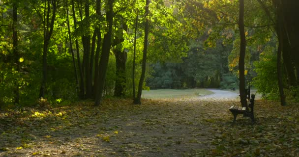 Empty Alley Green Trees Along The Road Empty Benches Fallen Yellow Leaves Sun Rays through the Leaves Park Alley Autumn Fall Outdoors