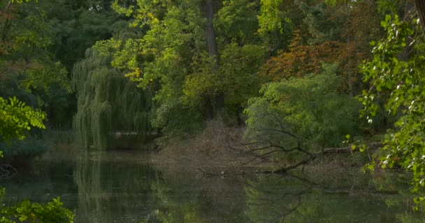 Forest Lake River Water Trees Are Around Acacia Willow Fallen Tree Green Leaves Foliage Overgrown Bank Sunny Smooth Weather Outdoors Summer Fall Autumn