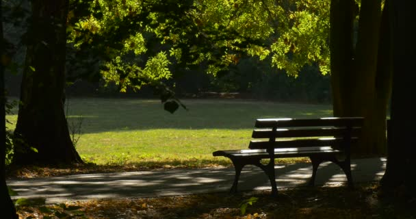 Empty Wooden Bench Under The Large Tree in Park Avenue Alley Sunny Day Sun Rays through the Green Leaves Footpath Green Meadow Yellow Fallen Leaves