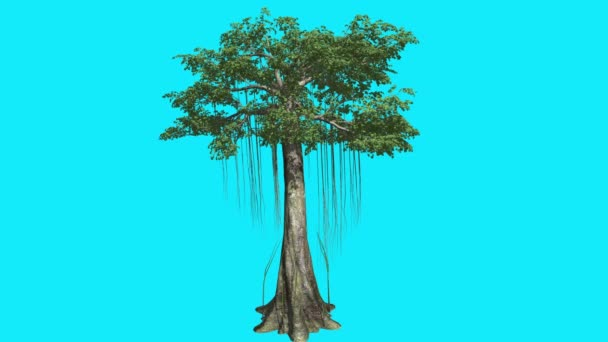 Kapok Swaying High Tree on Chroma Key Tree on Blue Screen Multiply Trunks Branches with Leaves are Swaying at the Wind Computer Generated Animation