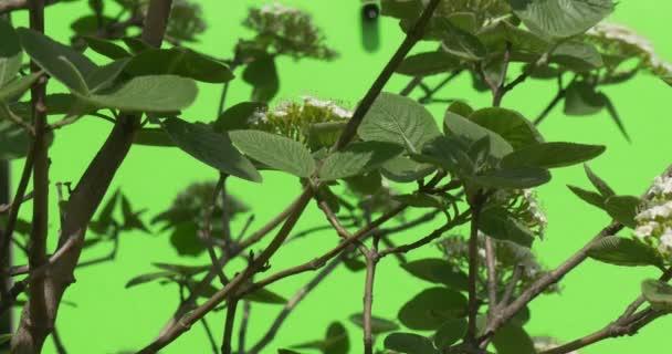 verde plantas arbustos hierba hojas flores ramas de rboles en chromakey verde vdeo