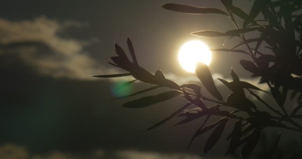 Contre-jour, Sun Shines Through the Tree Branch, Sky, Clouds