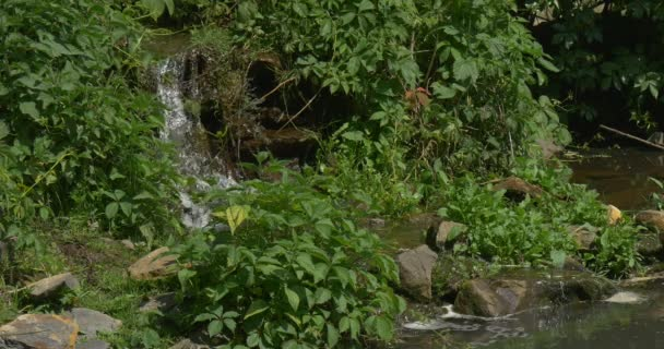 Waterfall in The Park, River Banks, Sunny