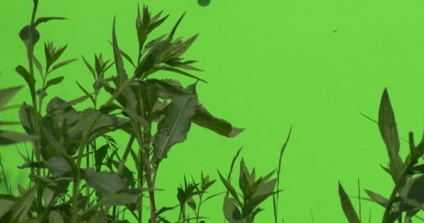 Repülő rovarok, friss zöld lombkoronája vad fű