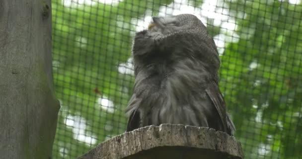 Puštík, pták, vlající peří, klec rošt
