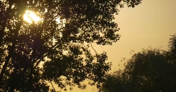 Oranžové, žluté slunce za stromem  Silhouette, pobočky, třepotající listí