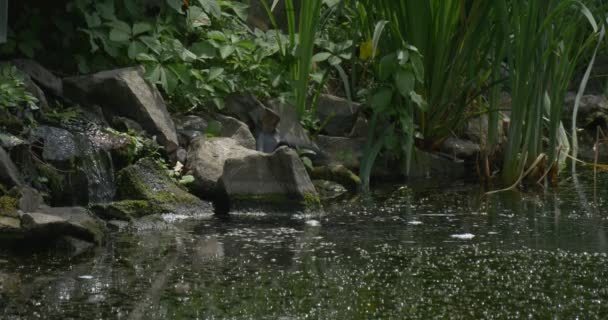 Swampy Pond With Stony Banks, Water Stream Into the Pond