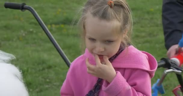 Little Blonde Girl in Pink Blouse is Eating Cotton Candy, Summer, Outdoor