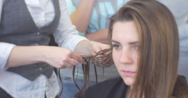 Stylist Hairdresser is Weaving the Braids Making a Hairstyle Woman with Long Brown Hairs Face Close Up Barbershop Hairdressing Salon Beauty Salon