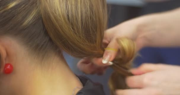 Stylist Hairdresser Is Making a Hairstyle Fixing a Hair Strands on the Back of Head with Rubber Band Woman with Long Hairs Barbershop Beauty Salon