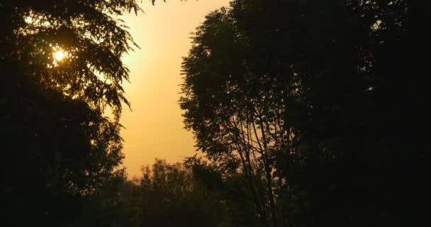 Oranžové, žluté slunce za stromem  silueta, pobočky, žlutá Sky