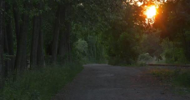 Oranžové, žluté slunce, slunce je kruh za stromy, alej, Parkway, silniční
