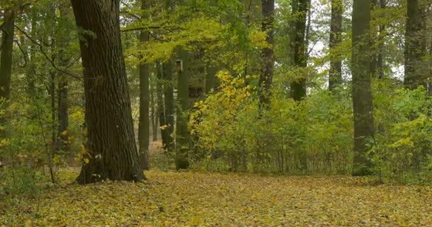 Muž v teplé Ushanka klobouk s srst ušní klapky turista v Jacket je jedoucího na kole směrem k fotoaparátu Fallen opustí Park Alley Forest Road podzim podzim