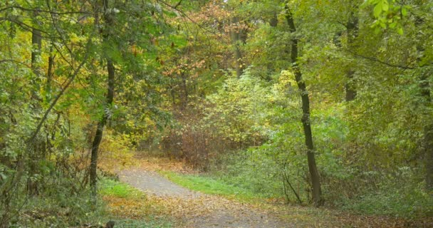 Road In The Wood Forest Park Area Different Trees Dry Fallen Leaves On The Ground Cloudy Autumn Day Opole Poland