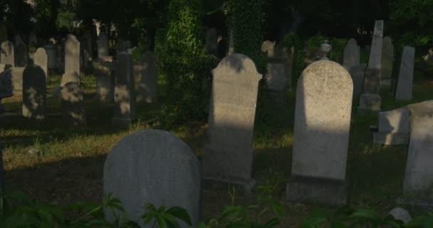 Régi sírkövek a temetőben, zöld levelei vadszőlőt közelről temetkezési hely katolikus sírok között zöld fű benőtt kövek a nap sugarai