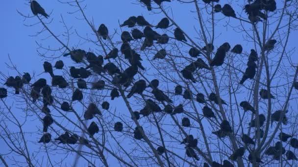 Madarak sziluettek A Lot a madarak feketerigó varjak ülnek a csupasz ágak Bush csapkodva a szárnyak ágak is imbolygott repülni fel őszi este