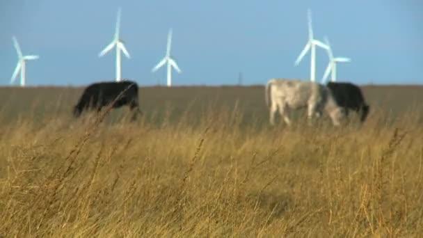 Kühe weiden auf dem Feld
