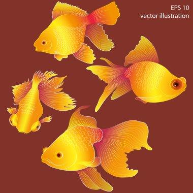 Aquarium goldfishes background