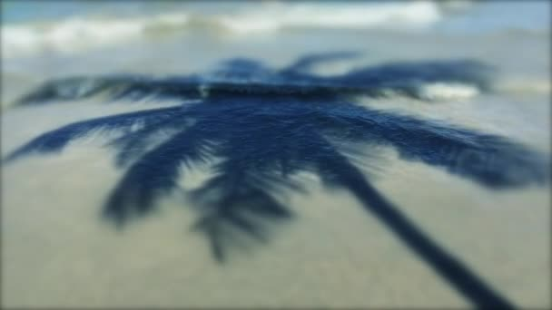 Palm Tree Shadow with Waves Brazilian Beach