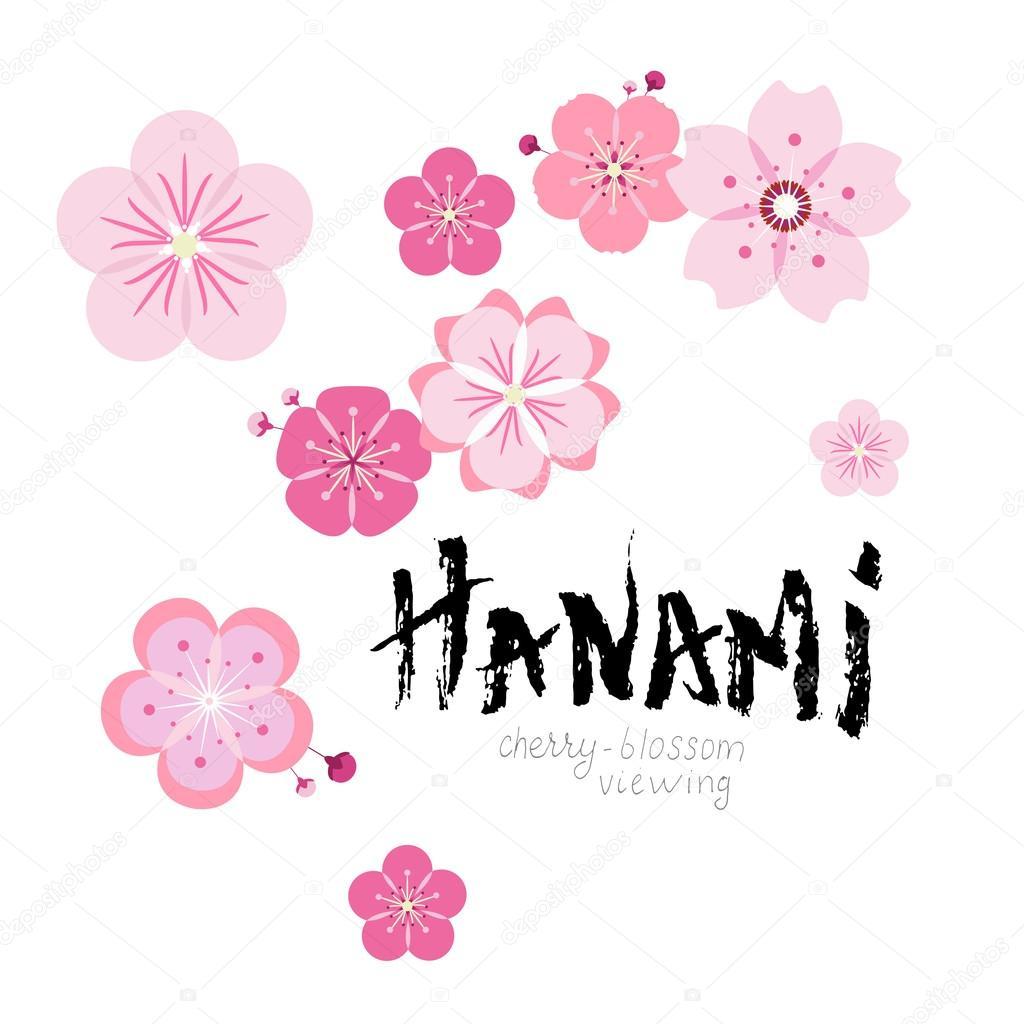 hanami on white