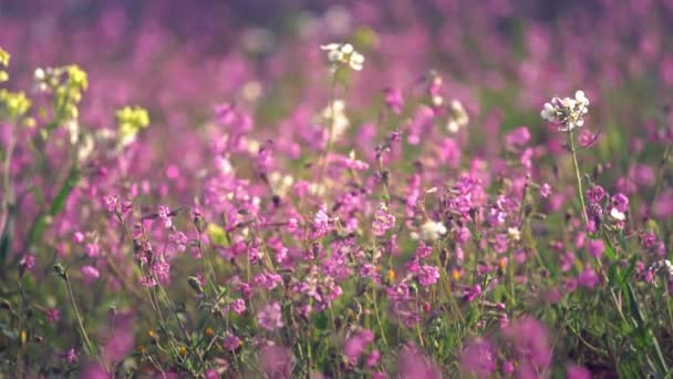 Kytice růžová barva záběr