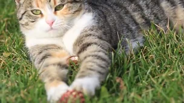 domestic cute cat playing in the garden