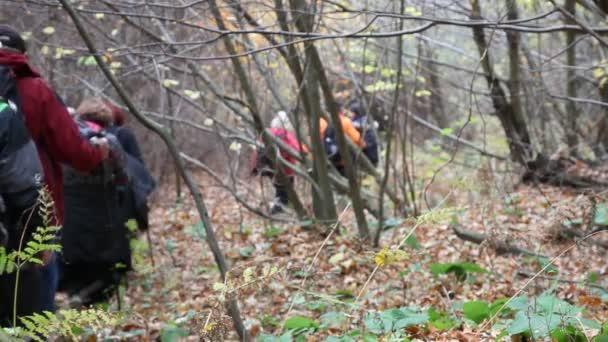 Autumn hiking HD 1080p