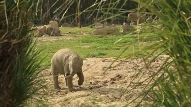 Baby elefánt a természetben