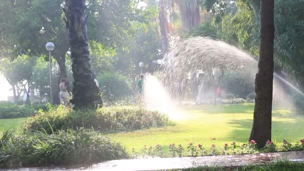tráva, sprinkler zavlažování